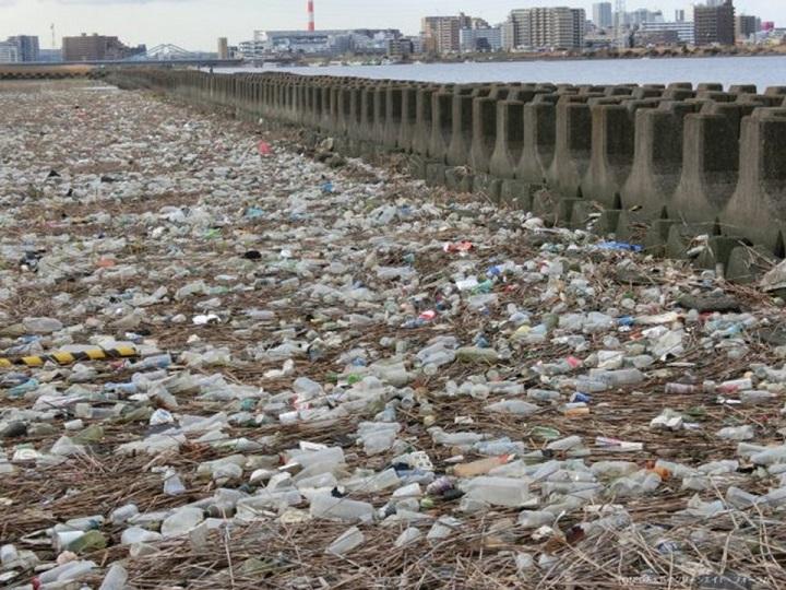 荒川河口付近(H28年2月撮影)